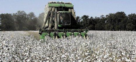 Ο Αγροτικός Σύλλογος Αλεξάνδρειας προειδοποιεί για την εξαφάνιση της καλλιέργειας του βαμβακιού λόγω των τιμών