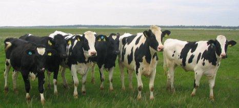 """Πώς θα εισπράττεται η ειδική εισφορά γάλακτος υπέρ του ΕΛΓΟ """"Δήμητρα"""""""