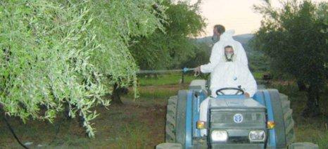 Οι υψηλές θερμοκρασίες μετά τις βροχές αποτελούν ιδανικές συνθήκες για την ανάπτυξη του δάκου