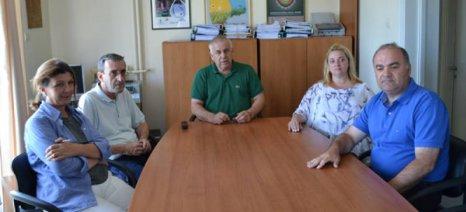 """Έρευνα ταυτοποίησης της ποικιλίας αμπελιού """"Τουρκοπούλα"""" στην περιοχή της Τριφυλίας"""