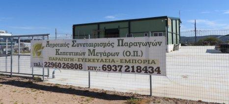 Παπαβασίλης προς Κασίμη και Δούρου: Απαράδεκτη και προκλητική η δεύτερη πρόσκληση προς τους νέους αγρότες