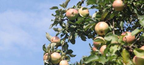 Οι υψηλές θερμοκρασίες προκάλεσαν εγκαύματα στα μήλα του Βελγίου