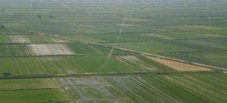 Αεροψεκασμοί από σήμερα για την καταπολέμηση των κουνουπιών στους ορυζώνες Θεσσαλονίκης και Σερρών