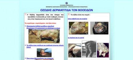 Επαγρύπνηση σε όλη την Ελλάδα για την οζώδη δερματίτιδα