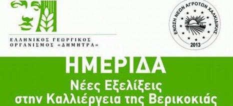 """Ημερίδα στη Χαλκιδική με θέμα """"Νέες εξελίξεις στην καλλιέργεια της βερικοκιάς"""""""