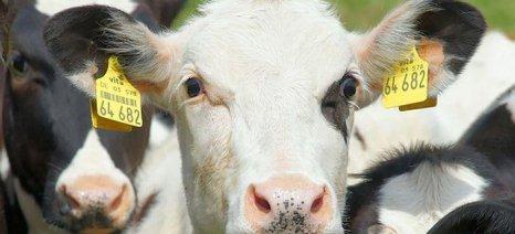 Συγκροτείται εθνικό κέντρο ελέγχου ζωικών νοσημάτων