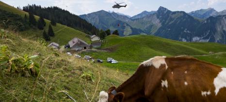 «Μάννα εξ ουρανού» το νερό του ελβετικού στρατού για τις διψασμένες αγελάδες