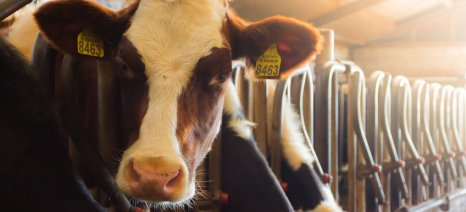 Δημοσιεύτηκαν σε ΦΕΚ οι προϋποθέσεις για τη συνδεδεμένη στη σταβλισμένη κτηνοτροφία