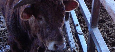 Μέτρα βιοπροφύλαξης σε κτηνοτροφικές εκμεταλλεύσεις