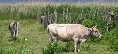 Από 22 έως 200 ευρώ ανά ζώο οι ενισχύσεις από το νέο πρόγραμμα «Γενετικοί Πόροι στην Κτηνοτροφία»