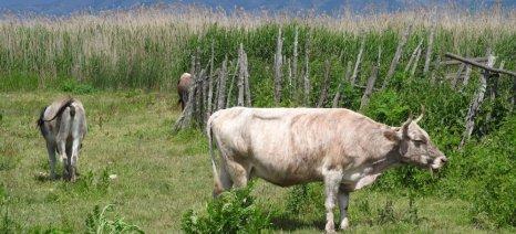 Αναρτήθηκαν οι καταστάσεις πληρωμής Αυτόχθονων Φυλών 2013 στην Κοζάνη
