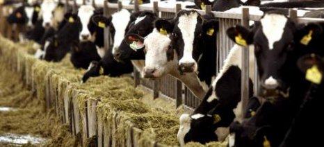 Στους βοοτρόφους Κεντρικής και Ανατολικής Μακεδονίας-Θράκης με τουλάχιστον έξι αγελάδες έκτακτη ενίσχυση 2,26 εκατ. ευρώ