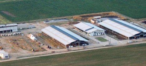 ΕΦΧΕ: Μεγάλη βιομηχανία γάλακτος ζητά από τους αγελαδοτρόφους να μειώσουν την παραγωγή τους κατά 10-15%