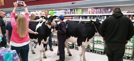 Βρετανοί κτηνοτρόφοι πέρασαν με τις αγελάδες τους μέσα από σούπερ-μάρκετ