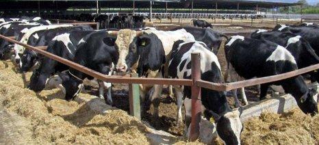 Γαλλικές ομάδες κτηνοτρόφων προσφεύγουν στα δικαστήρια κατά των γαλακτοβιομηχανιών