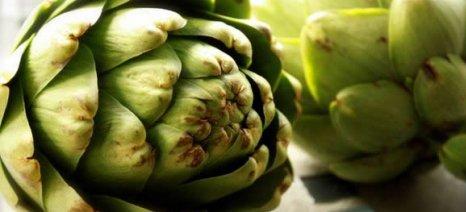 Αίτημα για ΠΟΠ της «Αγκινάρας Ιρίων» από τον οικείο Αγροτικό Συνεταιρισμό