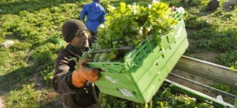 Ξεκινούν οι αιτήσεις για νόμιμη απασχόληση και ασφάλιση παράνομων μεταναστών στον αγροτικό τομέα