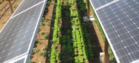 Συμπαραγωγή ηλεκτρισμού και αγροτικών προϊόντων σε φωτοβολταϊκό πάρκο: Αγροβολταϊκό