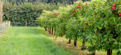 Πλήρωσε δασώσεις και βιολογική γεωργία ο ΟΠΕΚΕΠΕ