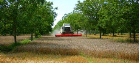 Ζητούνται επιστροφές του προγράμματος δάσωσης αγροτικών γαιών