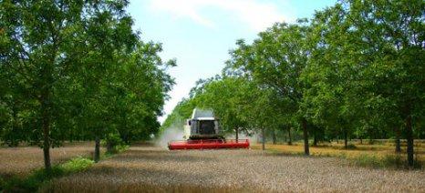 Τα πλαίσια ενισχύσεων για δασώσεις και γεωργοδασοκομικά συστήματα