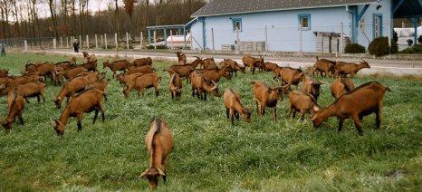 Να δοθεί άμεσα γενναία ενίσχυση των κτηνοτρόφων ζητά ο Κτηνοτροφικός Σύλλογος Ν. Χανίων