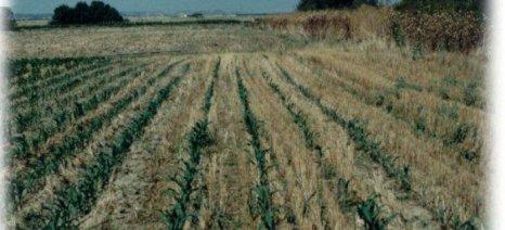 Ξεκίνησαν αιτήσεις για λαχανόκηπους που διαθέτει το ΑΠΘ σε κατοίκους της Θεσσαλονίκης