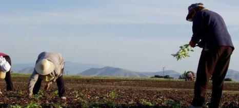 Τα δικαιολογητικά για την καλλιεργητική περίοδο 2016 - 2017 στα προϊόντα που ζητείται τιμολόγιο αγοράς σπόρου