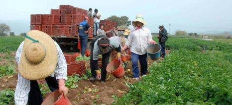 Δικηγόρος θα πρέπει να προεδρεύει στις εφορευτικές επιτροπές εκλογών των αγροτικών συνεταιρισμών