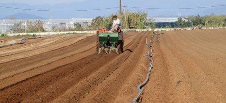 Μειώνουν τα στρέμματα ανοιξιάτικης πατάτας, γιατί φοβούνται τον καιρό σε Μεσσήνη και Καλαμάτα