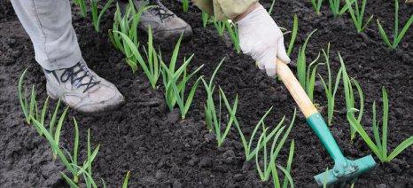 Πικρές αλήθειες από τους νέους αγρότες της Κομοτηνής
