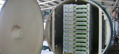 500 στρέμματα άισμπεργκ στην Τριφυλία