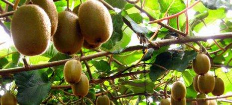 Βελτιώνονται οι εξαγωγές ακτινιδίων, εσπεριδοειδών, αγγουριών και μήλων