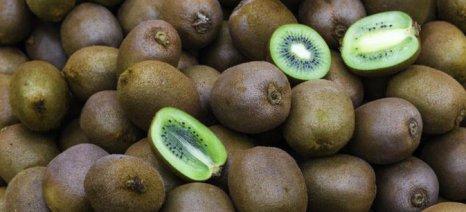 Καθορίστηκαν αγορές - στόχοι για δεκατρία αγροτικά προϊόντα