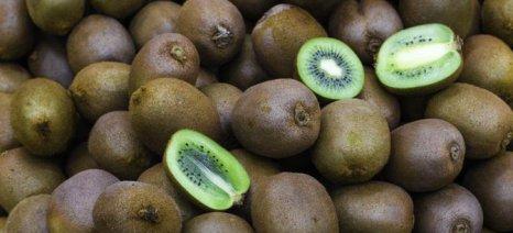 Σε πορεία για νέο ρεκόρ οι εξαγωγές ακτινιδίων, αυξήσεις για εσπεριδοειδή, μήλα, τομάτες και φράουλες