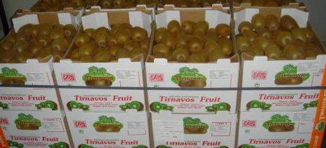 Ανοδικά κινήθηκαν οι εξαγωγές φρούτων και λαχανικών το α΄ τρίμηνο με «όχημα» το ακτινίδιο