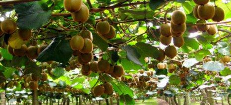 Ρυθμίσεις για νέες, τοπικές και παραδοσιακές ποικιλίες φυτών στον εθνικό κατάλογο