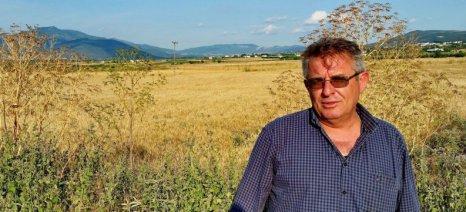 Σιτηρά και διαφυλλική λίπανση - τα αποτελέσματα από ένα πείραμα στον αγρό
