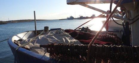 Το πλαγκτόν ταλαιπωρεί τους αλιείς του Θρακικού Πελάγους