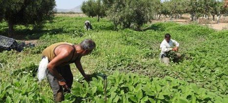 Ρύθμιση για την άτοκη επιστροφή εγγυητικών επιστολών αγροτών που απασχολούν αλλοδαπούς εργάτες