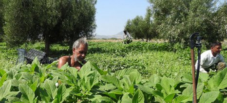 Αίτηση κατ' εξαίρεση απασχόλησης αλλοδαπών εργατών με εργόσημο θα καταθέτουν οι αγρότες