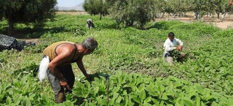 Ρύθμιση για τη ρευστοποίηση εγγυητικών επιστολών αγροτών που έχει δεσμεύσει η Τράπεζα Πειραιώς