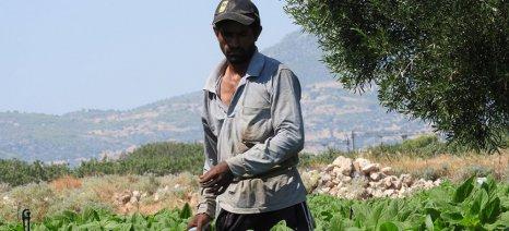Πώς η έλλειψη εργατών γης επιβάρυνε φέτος το κόστος παραγωγής