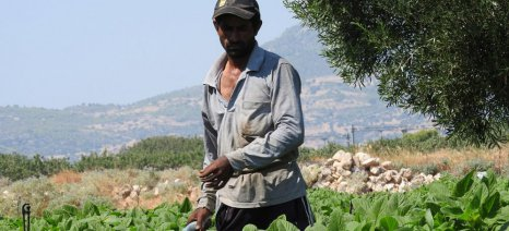 Βουλευτές ΣΥΡΙΖΑ: Τι μέτρα θα λάβει η κυβέρνηση για να εξασφαλίσει εργάτες γης για τις αγροτικές εκμεταλλεύσεις;