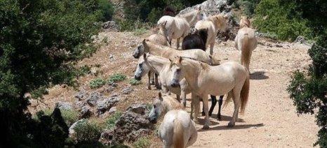 Προστασία του Αίνου και των περιοχών Natura της Κεφαλονιάς ζητά η τοπική ΑΔΕΔΥ