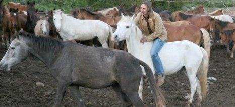 Ο Α.Σ. Γρεβενών αναλαμβάνει τη διατήρηση των αλόγων φυλής Πίνδου και των αγελάδων Ελληνικής Κόκκινης Φυλής