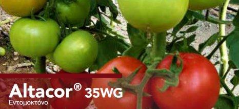 Το νέας γενιάς εντομοκτόνο ALTACOR® 35 WG της FMC προστατεύει τα κηπευτικά από Tuta Absoluta και άλλα λεπιδόπτερα