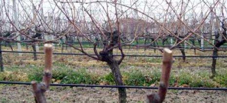 Διαχείριση ξυλώδους βιομάζας από αγροτικά κλαδέματα και εκριζώσεις
