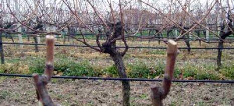 Απειλή και για το κρασί η κλιματική αλλαγή