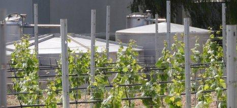 Πώς η κρίση επηρεάζει την ελληνική παραγωγή κρασιού
